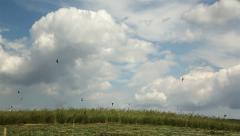 Swallows flying over green grass field in spring season Stock Footage