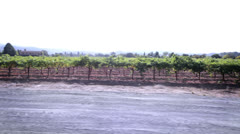 Driving through the Napa Valley wine region in California Stock Footage