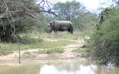 Rhino at lake in Hluhluwe Park in South Africa - stock photo
