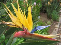 """Mandela flower in Botanic garden """"Kirstenbosch"""" in South Africa - stock photo"""