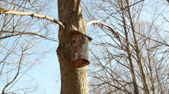 Tree bark made nesting boxes hung on a tree branch in park Stock Footage