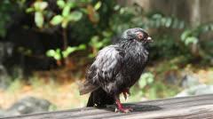 Black Bird in Puerto Rico - Possible Pollution Stock Footage