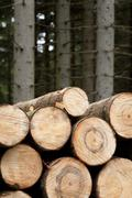Felled wood Stock Photos