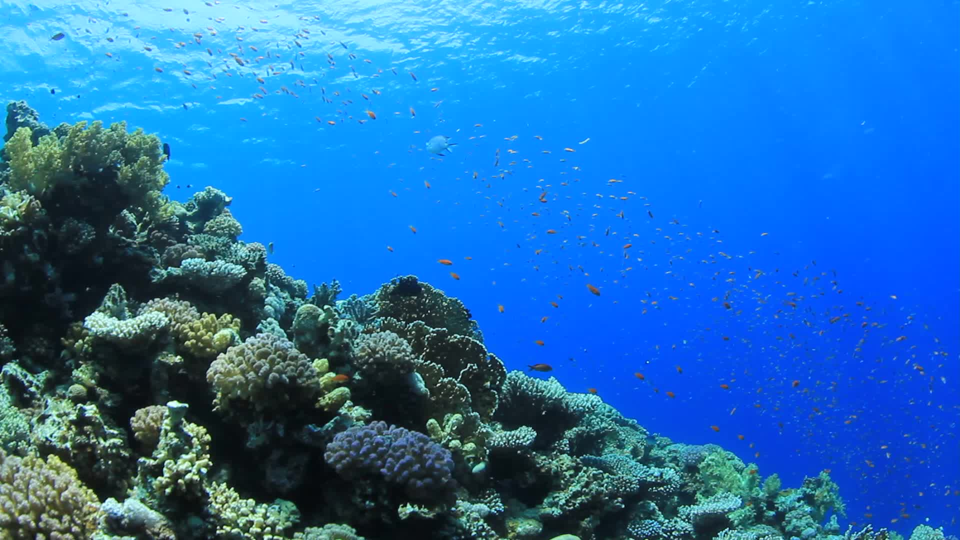 Underwater Coral Reef With Tropical Fish Stock Video ...
