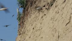 Sand Martin Stock Footage