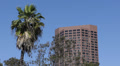 Palm Trees, Highrise Office towers, Downtown Los Angeles, USA Footage