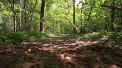 Run on a forest footpath. Bottom view.  Stabilized  video. Stock Footage