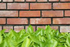 Leaves brick wall Stock Photos