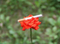 Red rose and cigarette Stock Photos