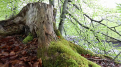 Forest Floor - stock footage