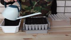 Preparing nursery box for onion seeding 2c Stock Footage