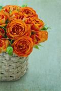 orange roses on green vintage background - stock photo