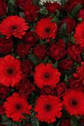 Red floral arrangement Stock Photos