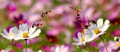 daisy flower with ant stand on it - stock photo