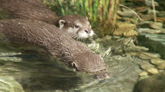 Otter - stock footage