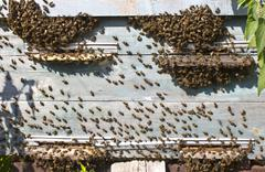 Log in to the hive Stock Photos