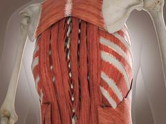3D Rendering Intestinal internal organ - stock illustration