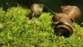 Three snails.Macro Footage