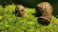 Stock Video Footage of Three snails.Macro