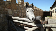 Beautiful horse outdoors 8 Stock Footage