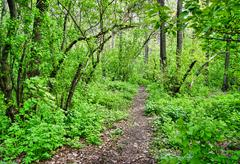 Stock Photo of path in the spring deciduous forest
