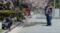 Spring season with sakura blossom in Kyoto, Japan HD Footage