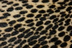 Faux leopard fur texture background Stock Photos