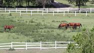 Herd of horses in corral ranch scene Stock Footage