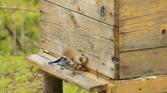 Hive. The bees in the apiary Stock Footage