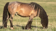 Beautiful Horse HD Stock Footage