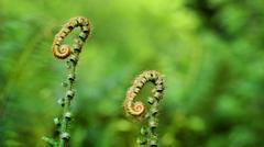 Fern Fronds Macro - stock photo