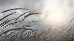 Grass field and wind Stock Footage