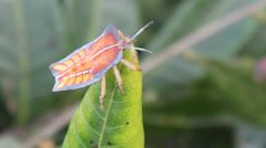 Bugs on leaves Stock Footage