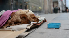 Homeless dog begging in crowded street Stock Footage