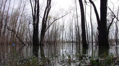 Trees in the water during the spring flood Stock Footage