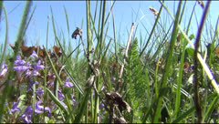 Grass, spring, field, bushes, creek Stock Footage