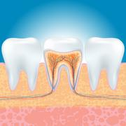 tooth - stock illustration