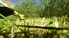 Rotary Lawn Mower Mowing The Grass Stock Footage
