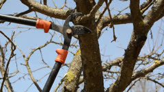 Fruit tree cut trim two handle clippers spring garden Stock Footage