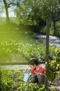 jeune garçon arrosant les fraises du potager - stock photo