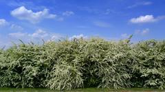 massive blooming - stock photo