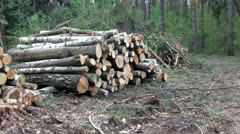Stacks of logs in a forest - stock footage