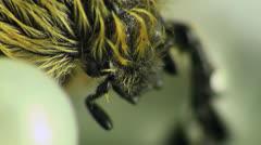 Beetle sitting on a leaf Stock Footage