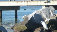 Seagull near the pier Stock Footage