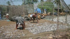 Two local people, man and woman, drying fish on beach Stock Footage