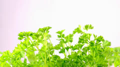 Parsley is harvested Stock Footage