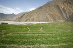 panorama view of green paddy fileds and mountain in the himalayas, annapurna, - stock photo