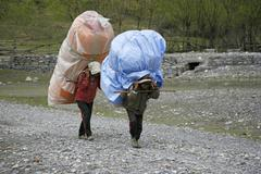 Porters carrying heavy loads on their back, annapurna, nepal Stock Photos