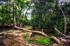 Jungle forest at angkor wat area Stock Photos