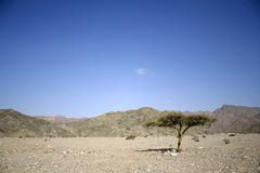 dry desert in red sea region, sinai, egypt - stock photo